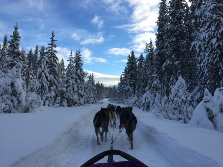 Dog sledding in Lake Louise, Canada